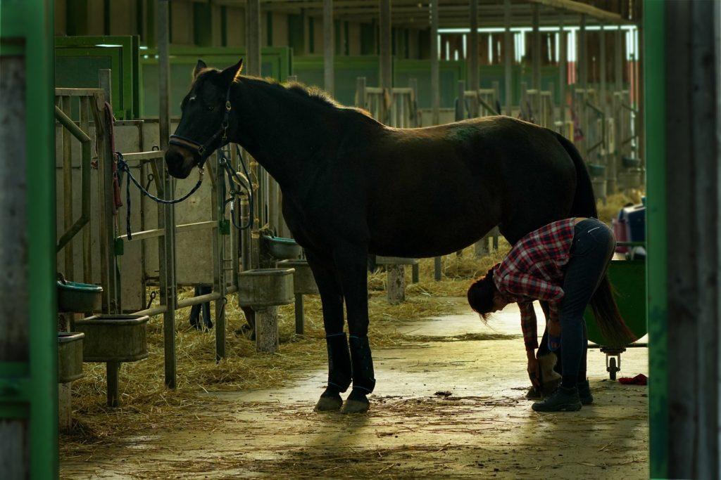 Reiterstiefel pflegen nach der Stallarbeit